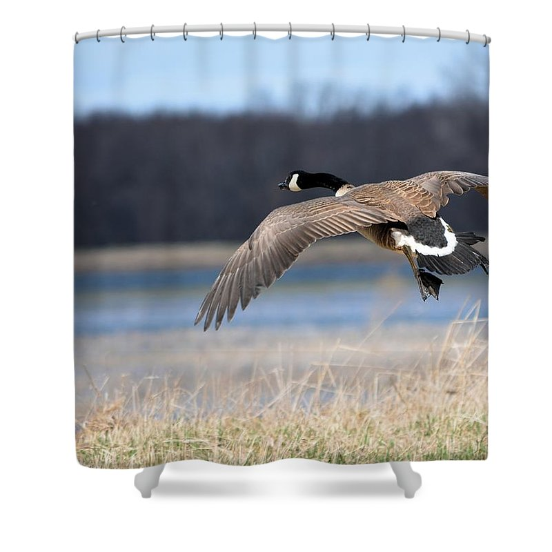 Goose Shower Curtain featuring the photograph Escape by Bonfire Photography