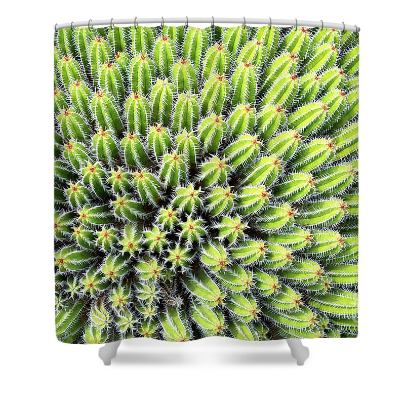 Cactus Shower Curtain featuring the photograph Euphorbia by Delphimages Photo Creations