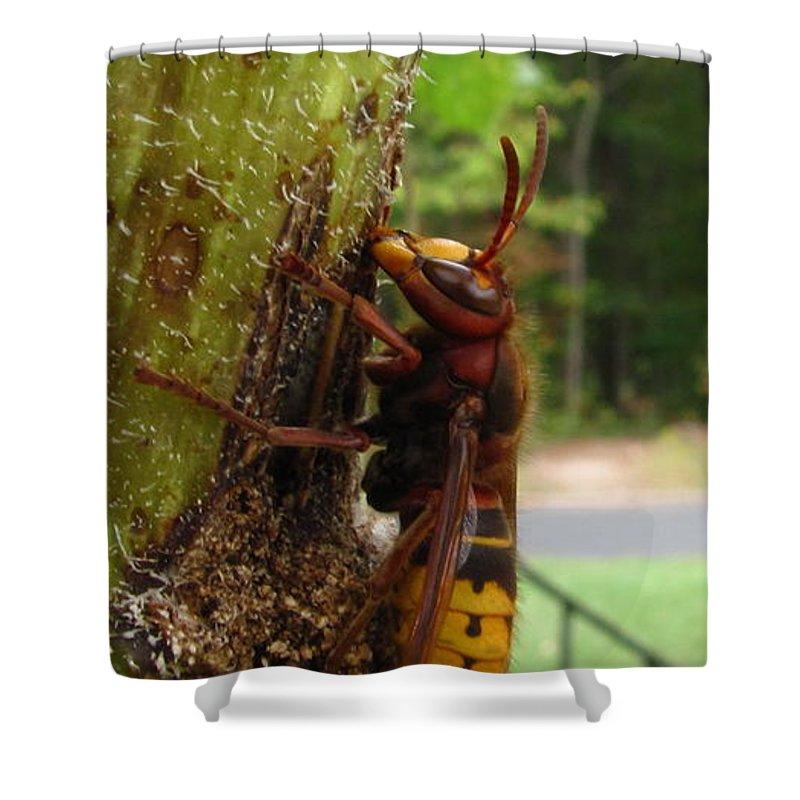 European Hornet Shower Curtain featuring the photograph European Hornet by Joshua Bales