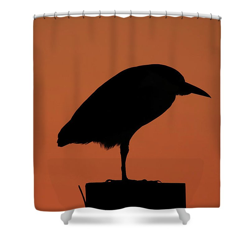 Silhouette Shower Curtain featuring the photograph Evening Chill by Burge Darwin