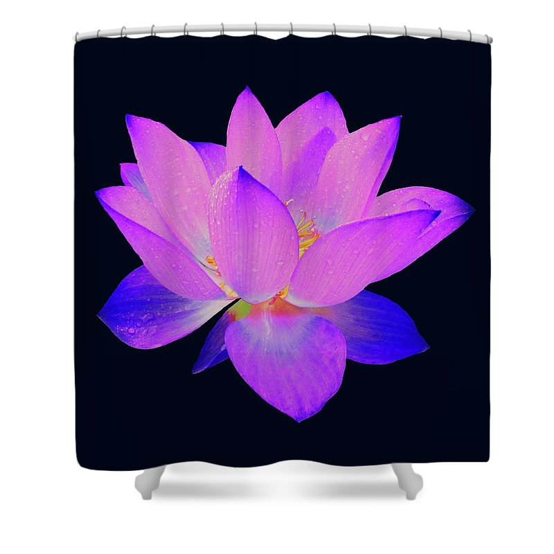 Lotus Shower Curtain featuring the painting Evening Purple Lotus by David Dehner