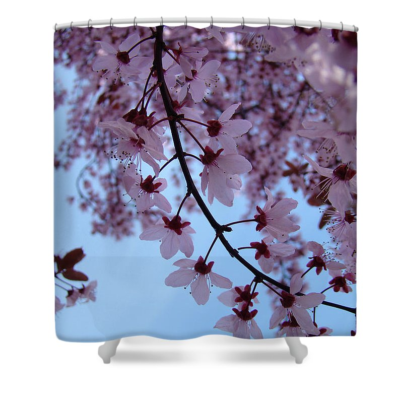 Blossom Shower Curtain featuring the photograph Evening Sky Pink Blossoms Art Prints Canvas Spring Baslee Troutman by Baslee Troutman