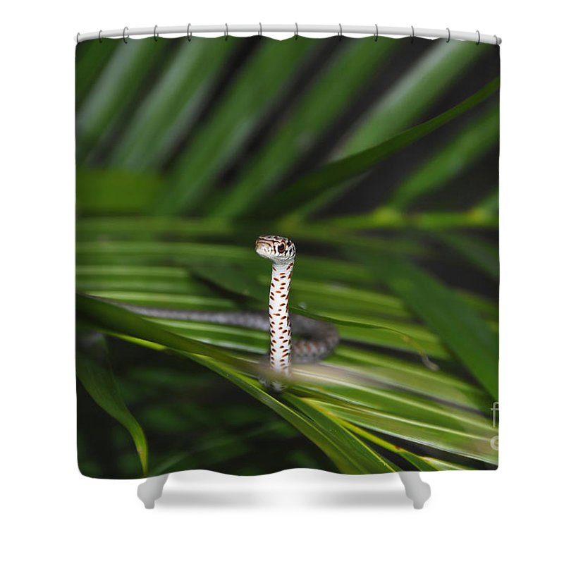 Everglades Racer Shower Curtain featuring the photograph Everglades Racer by David Lee Thompson
