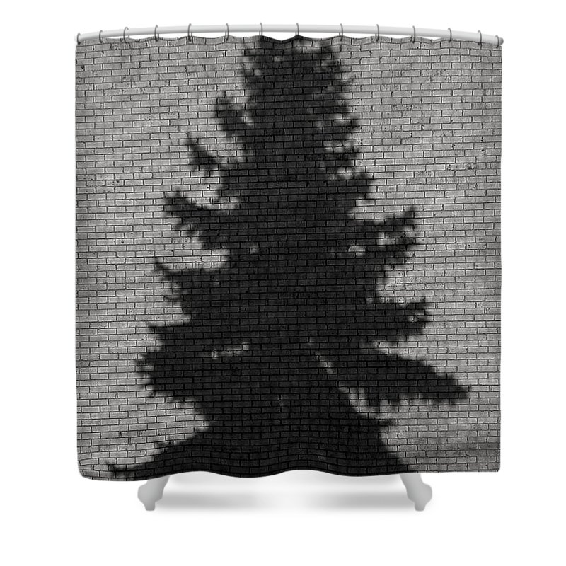 Evergreen Shower Curtain featuring the photograph Evergreen by Chris Fleming