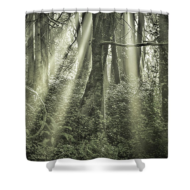 Sunbeams Shower Curtain featuring the photograph Exaltation by Don Schwartz