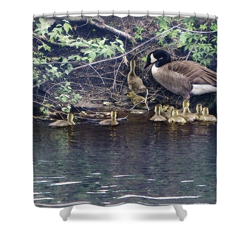 Baby Geese Shower Curtain featuring the photograph Exit by Barbara Hymer