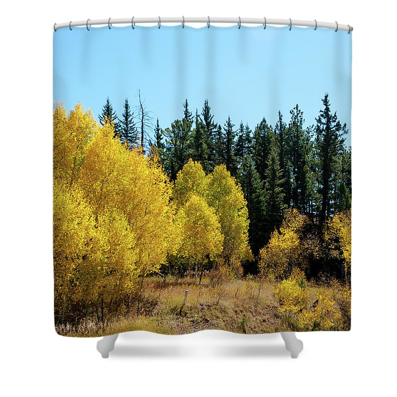 Colorado Shower Curtain featuring the photograph Explosion Of Yellow by John Bartelt