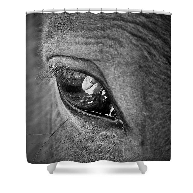 Eye Shower Curtain featuring the photograph Eye See You by Hannah Breidenbach