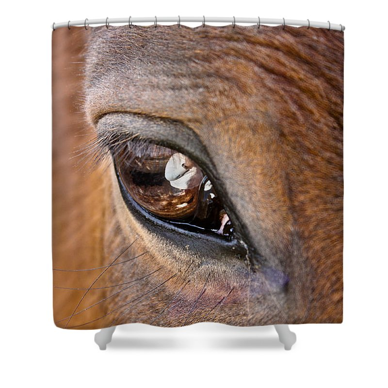 Horse Shower Curtain featuring the photograph Eye See You Too by Hannah Breidenbach