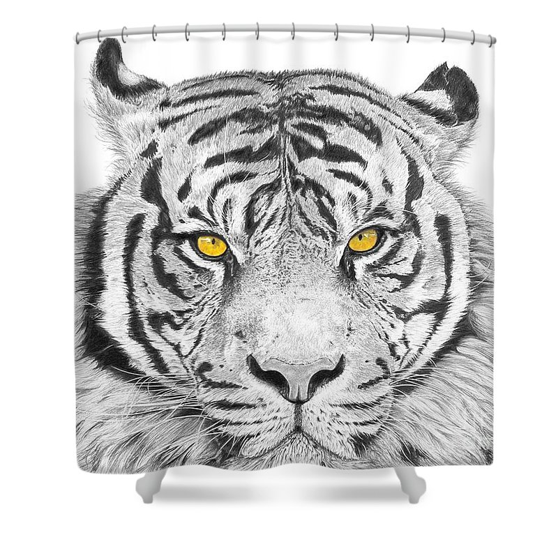 Tiger Shower Curtain featuring the drawing Eyes Of The Tiger by Shawn Stallings