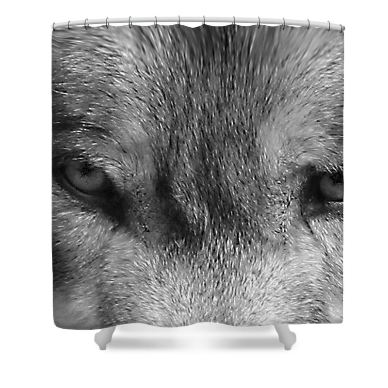 Wolf Canid Canus Lupis Wildlife Grey Gray Timberwolf Animal Mammal Photograph Photograhy Eyes Black White Desaturate Shower Curtain featuring the photograph Eyes of the Wild by Shari Jardina