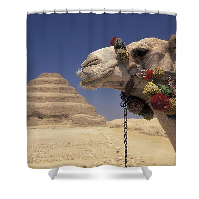 Pyramid Shower Curtain featuring the photograph Face Of A Camel In Front Of A Pyramid by Richard Nowitz