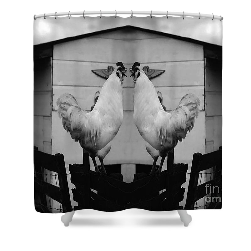 Rooster Shower Curtain featuring the photograph Face Off by Peter Piatt