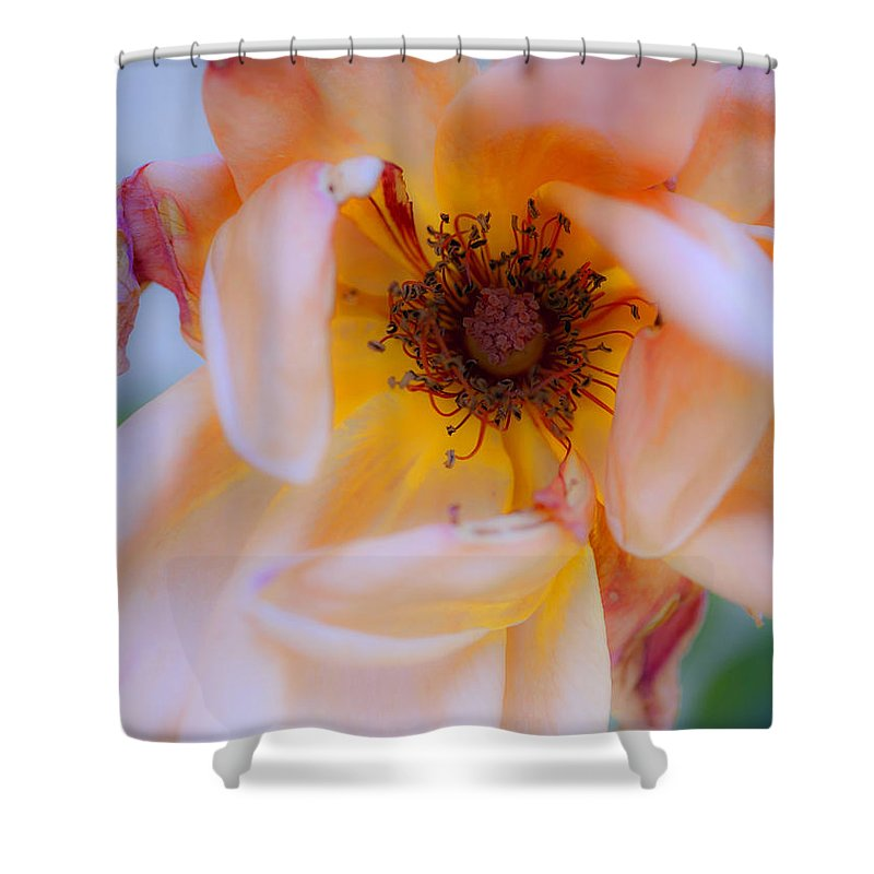 Flower Shower Curtain featuring the photograph Fade Away by Stephen Anderson