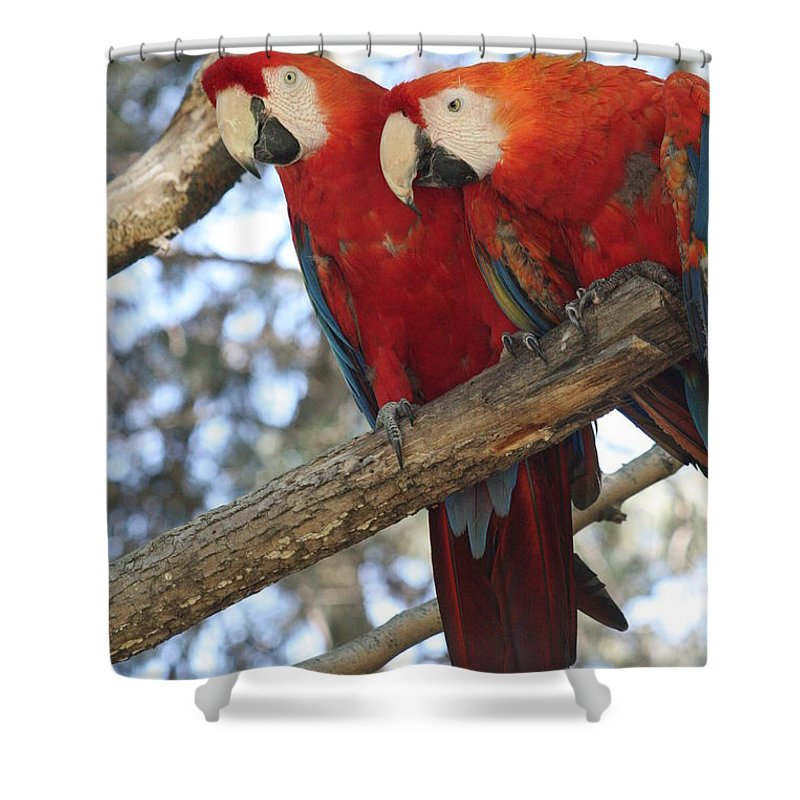 Couple Shower Curtain featuring the photograph Fair Pair - Scarlet Macaw by Lynn Michelle