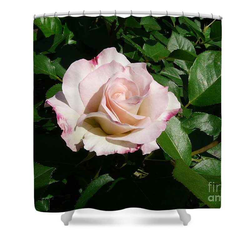 Rose Shower Curtain featuring the photograph Fait Accompli by Kendall Eutemey