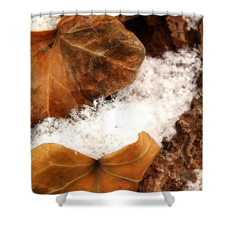Fall Shower Curtain featuring the photograph Fall And Winter by Gaby Swanson