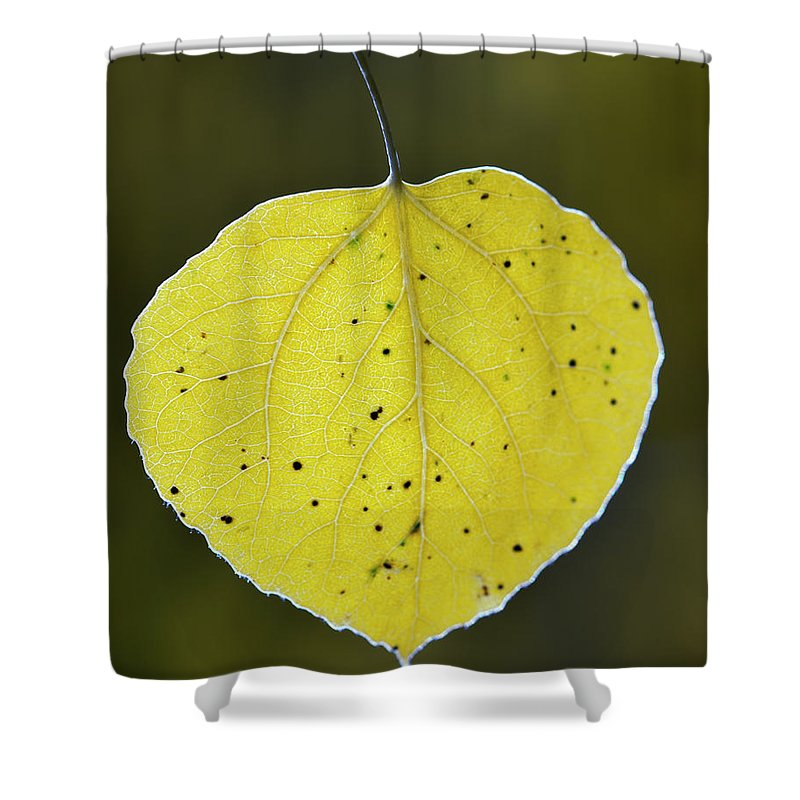 Fall Aspen Leaf Shower Curtain featuring the photograph Fall Aspen Leaf by Gary Langley
