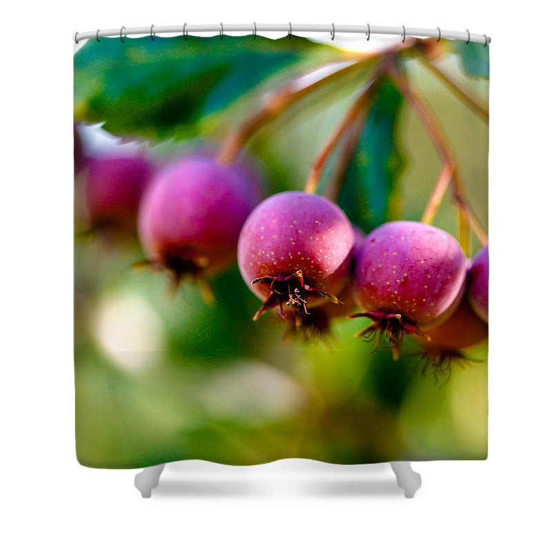 Berry Shower Curtain featuring the photograph Fall Berries by Marilyn Hunt