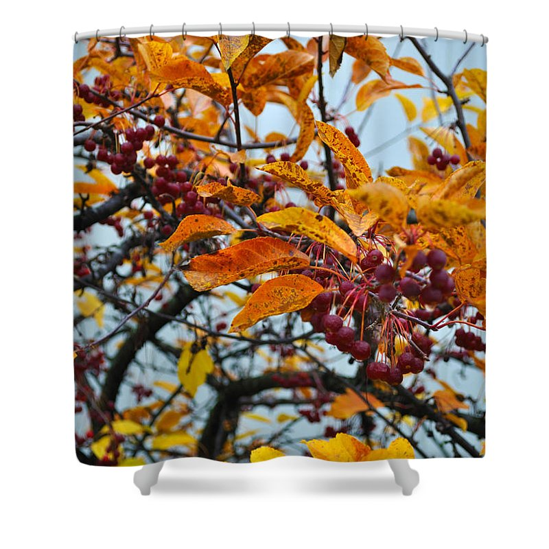 Berries Shower Curtain featuring the photograph Fall Berries by Tim Nyberg