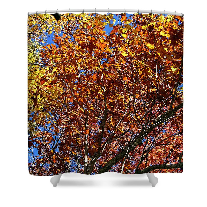 Fall Shower Curtain featuring the photograph Fall by Flavia Westerwelle