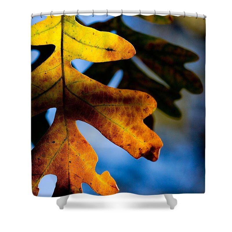 Leaf Shower Curtain featuring the photograph Fall Foliage Leaf Near Ruidoso Nm by Matt Suess