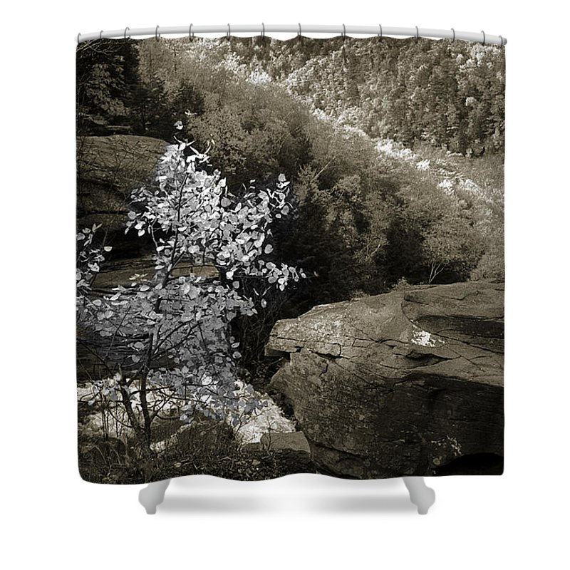 Nature Shower Curtain featuring the photograph Fall Foliage by Yuri Lev