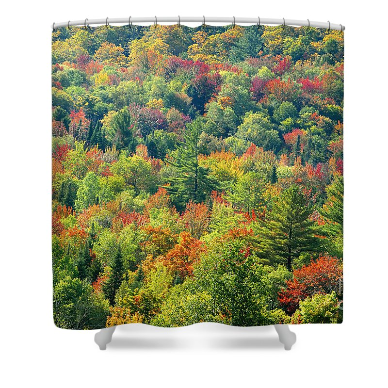 Adirondack Mountains Shower Curtain featuring the photograph Fall Forest by David Lee Thompson
