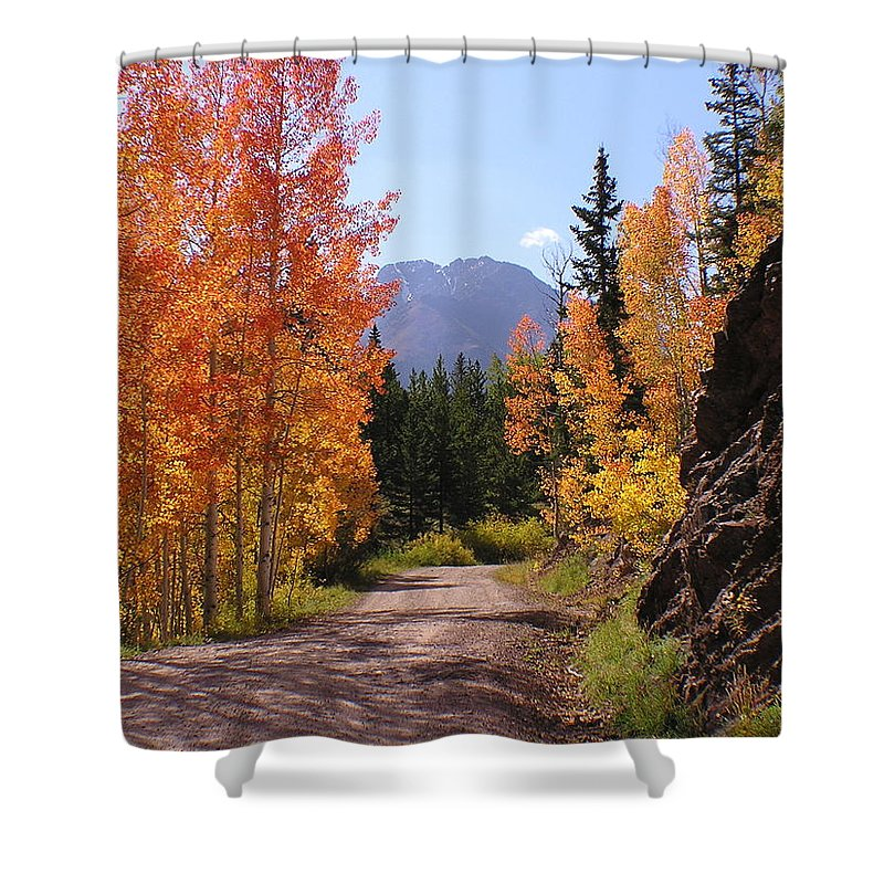 Trees Shower Curtain featuring the photograph Fall In Colorado by Carol Milisen