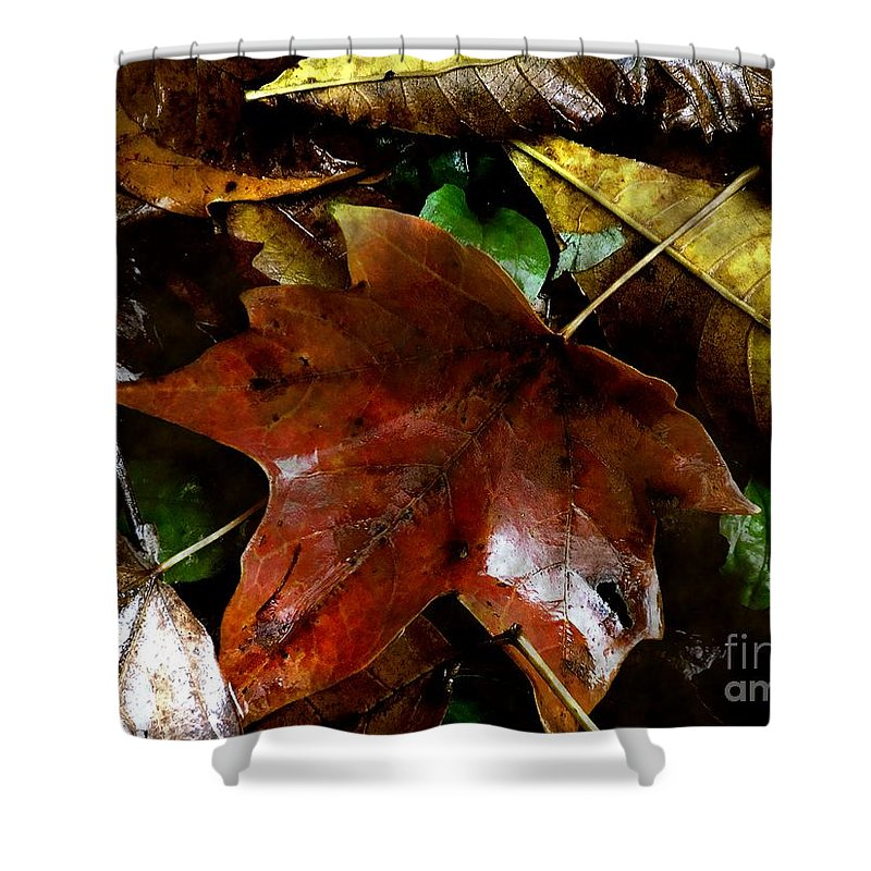 Autumn Shower Curtain featuring the photograph Fall Into Fall by RC DeWinter