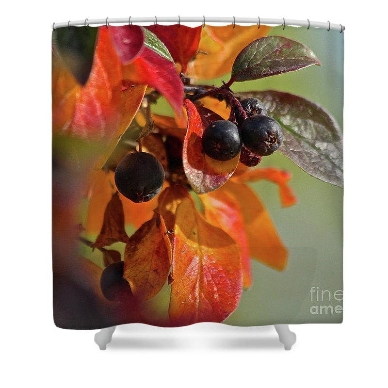 Fall Shower Curtain featuring the photograph Fall Leaves And Berries by Ann E Robson