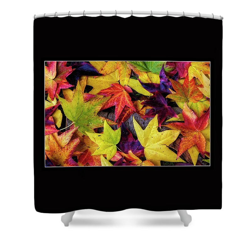 Leaves Shower Curtain featuring the photograph Fall Leaves by Richard Cronberg