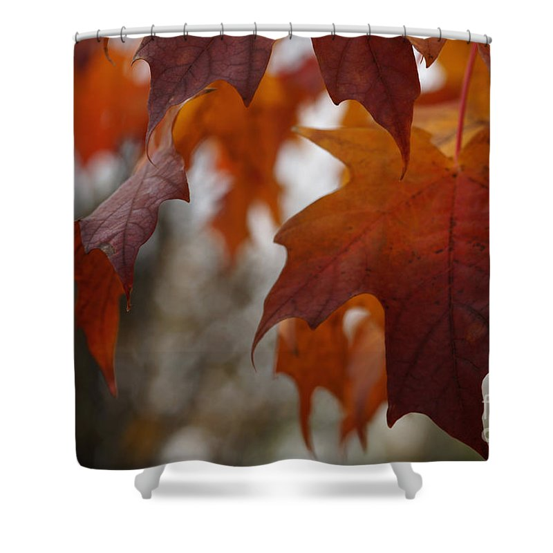 Autumn Shower Curtain featuring the photograph Fall by Linda Shafer