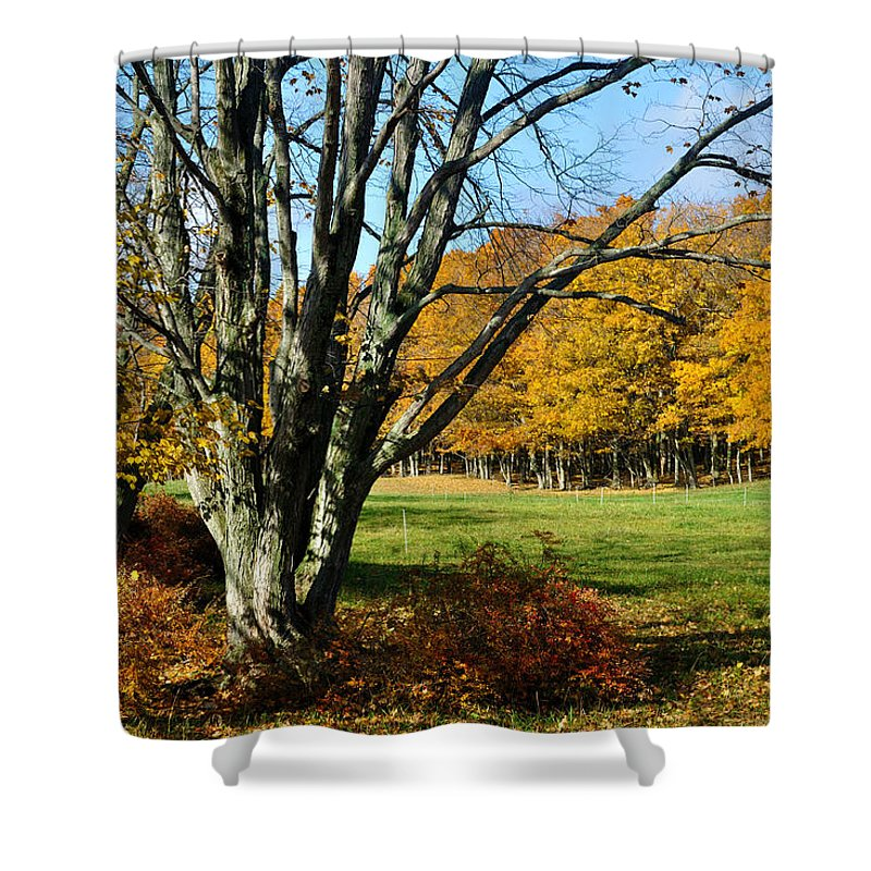 Pasture Shower Curtain featuring the photograph Fall Pasture by Tim Nyberg