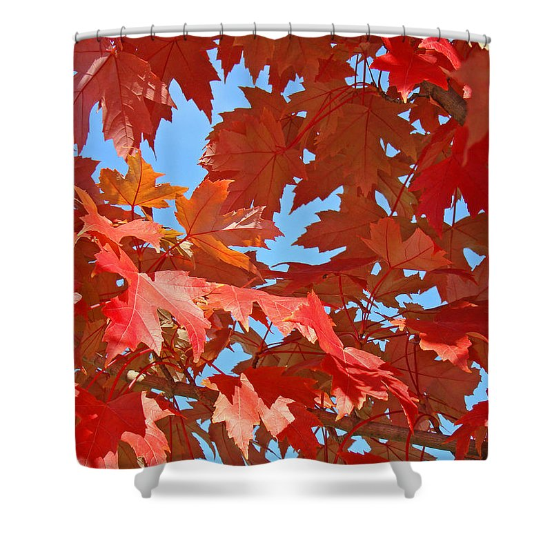 Autumn Shower Curtain featuring the photograph Fall Tree Leaves Red Orange Autumn Leaves Blue Sky by Baslee Troutman