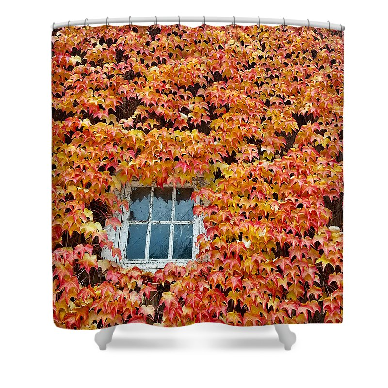 Leaves Shower Curtain featuring the photograph Fall Window by Lindy Pollard