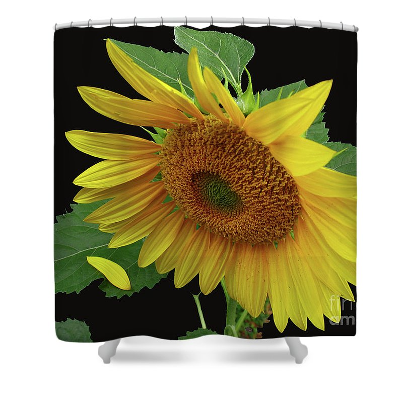 Sunflower Shower Curtain featuring the photograph Fallen by Douglas Stucky