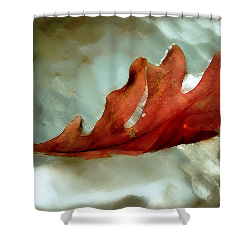 Nature Shower Curtain featuring the photograph Fallen Leaf by Linda Sannuti