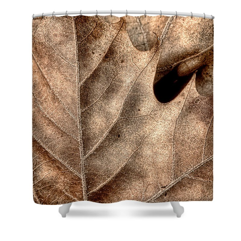Fallen Tree Shower Curtains