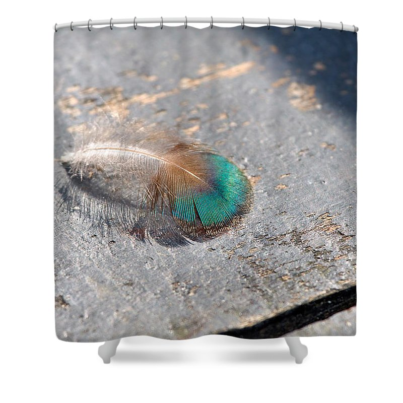 Peacock Shower Curtain featuring the photograph Fallen Peacock Feather by Louise Heusinkveld