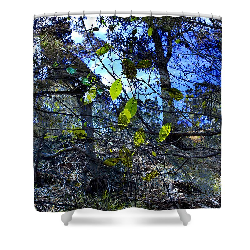 Leaves Shower Curtain featuring the photograph Falling Leaves by Kelly Jade King