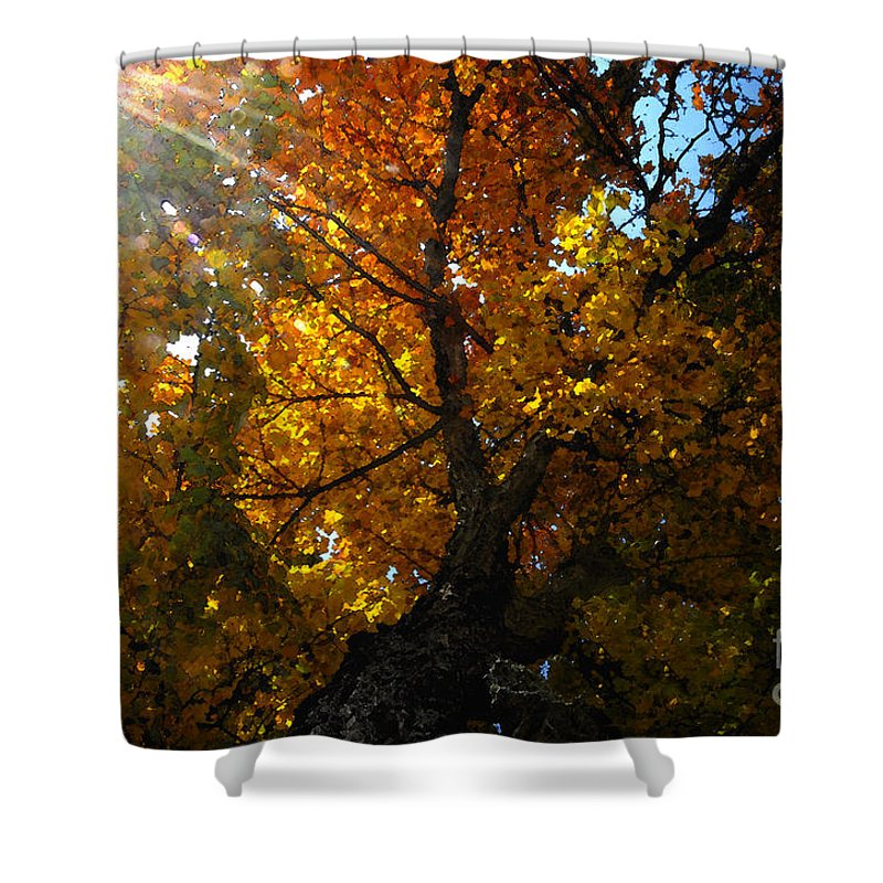 Art Shower Curtain featuring the painting Falling Light by David Lee Thompson