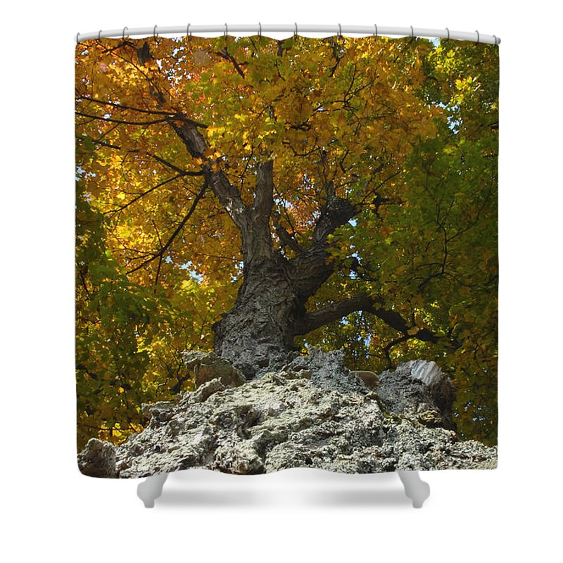 Fall Shower Curtain featuring the photograph Falling Tree by David Lee Thompson