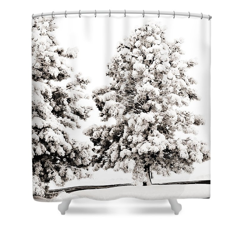 Trees Shower Curtain featuring the photograph Family Of Trees by Marilyn Hunt