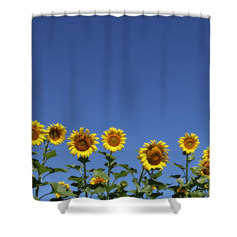 Sunflowers Shower Curtain featuring the photograph Family Time by Amanda Barcon