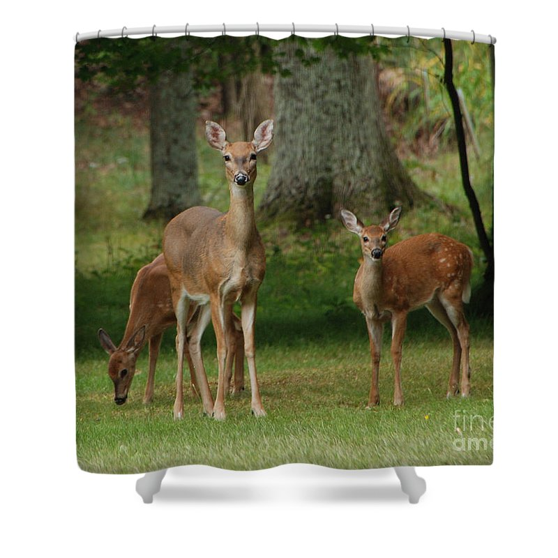 Deer Shower Curtain featuring the photograph Family Walk by Grace Grogan