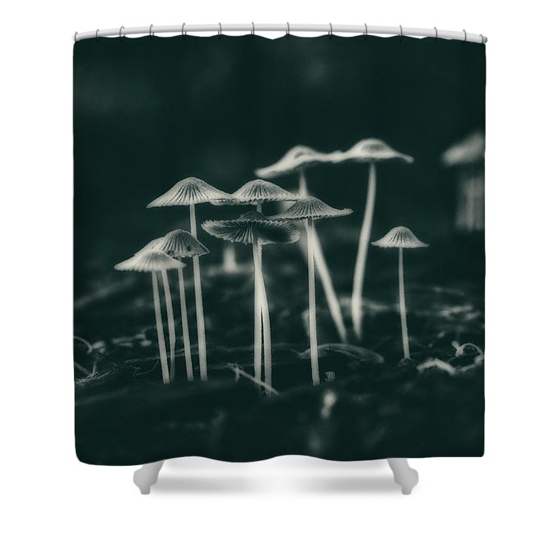 Fungus Shower Curtain featuring the photograph Fanciful Fungus by Tom Mc Nemar