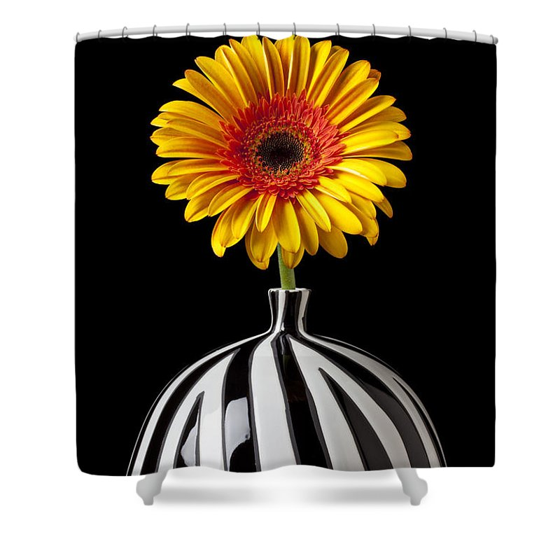 Daisy Flower Vase Petals Yellow Shower Curtain featuring the photograph Fancy Daisy In Stripped Vase by Garry Gay