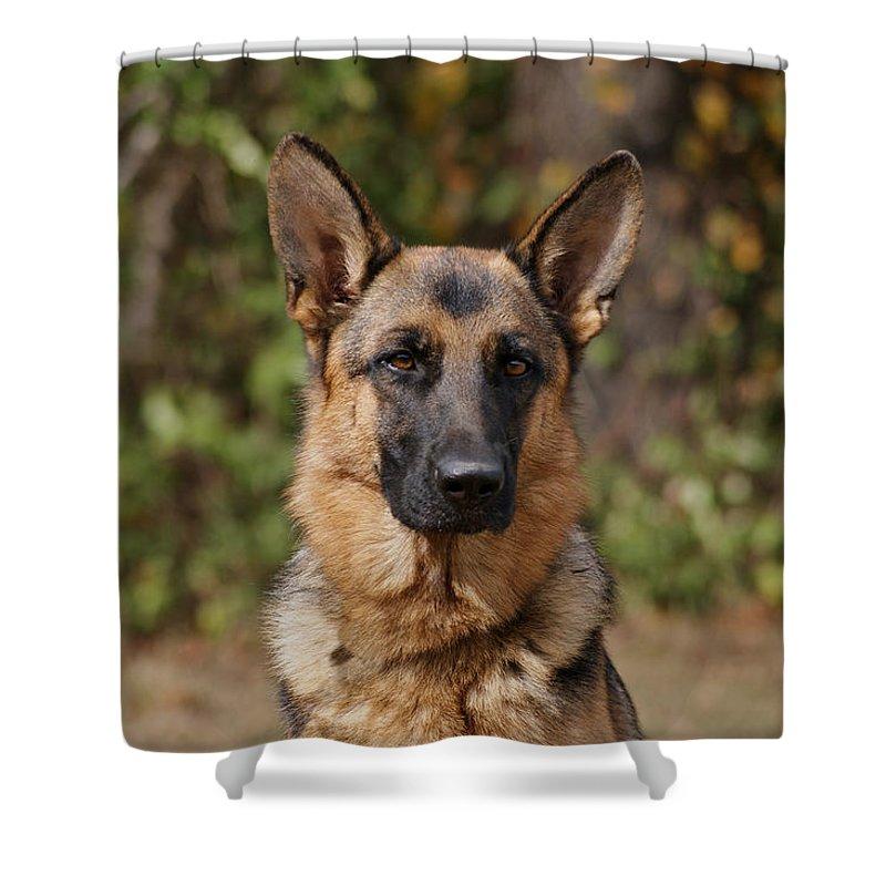 German Shepherd Dog Shower Curtain featuring the photograph Fancy by Sandy Keeton
