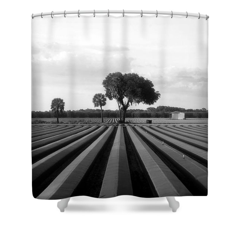 Farmland Shower Curtain featuring the photograph Farmland by David Lee Thompson